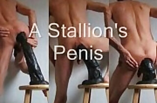 The Black Stallion Horse Penis Anal Fuck, Fist, and Piss Play.  black  porn  ,  dildoing  ,  extreme  ,  fisted  ,  piss   xxx porn